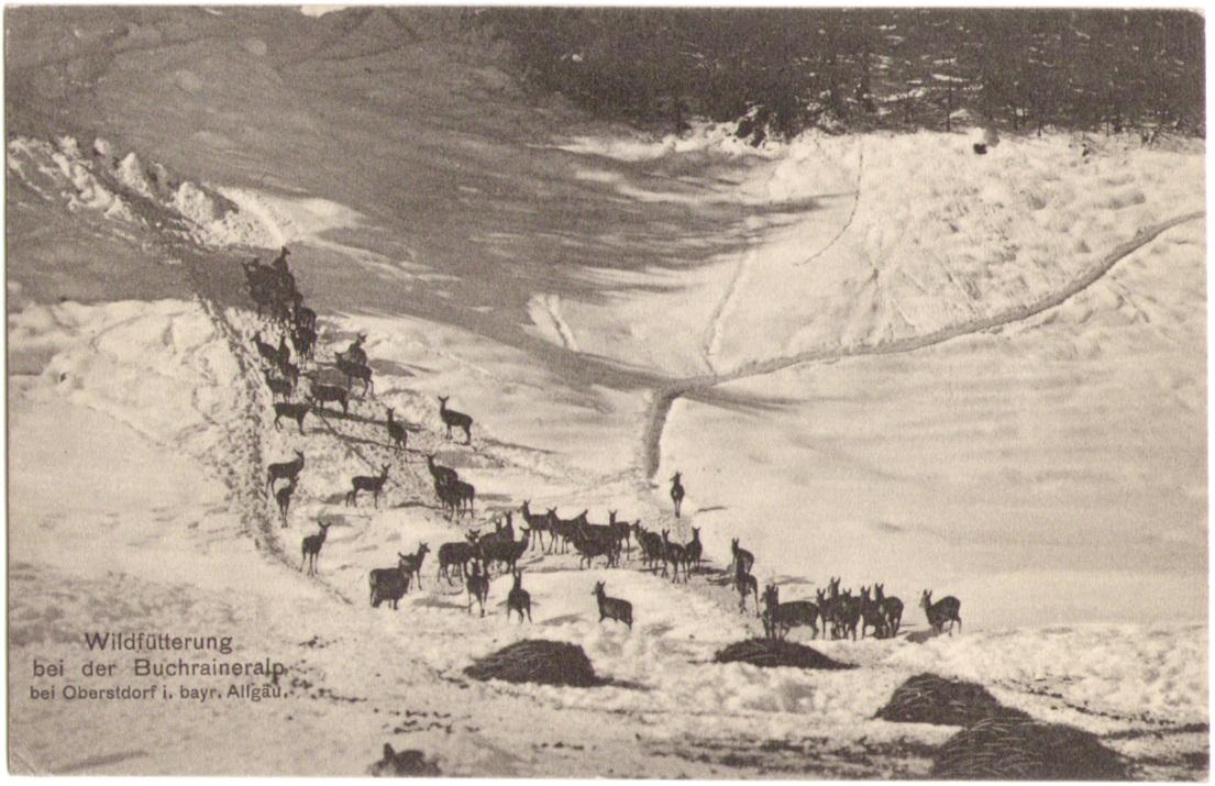 1033_Wildfuetterung 1911p.jpg