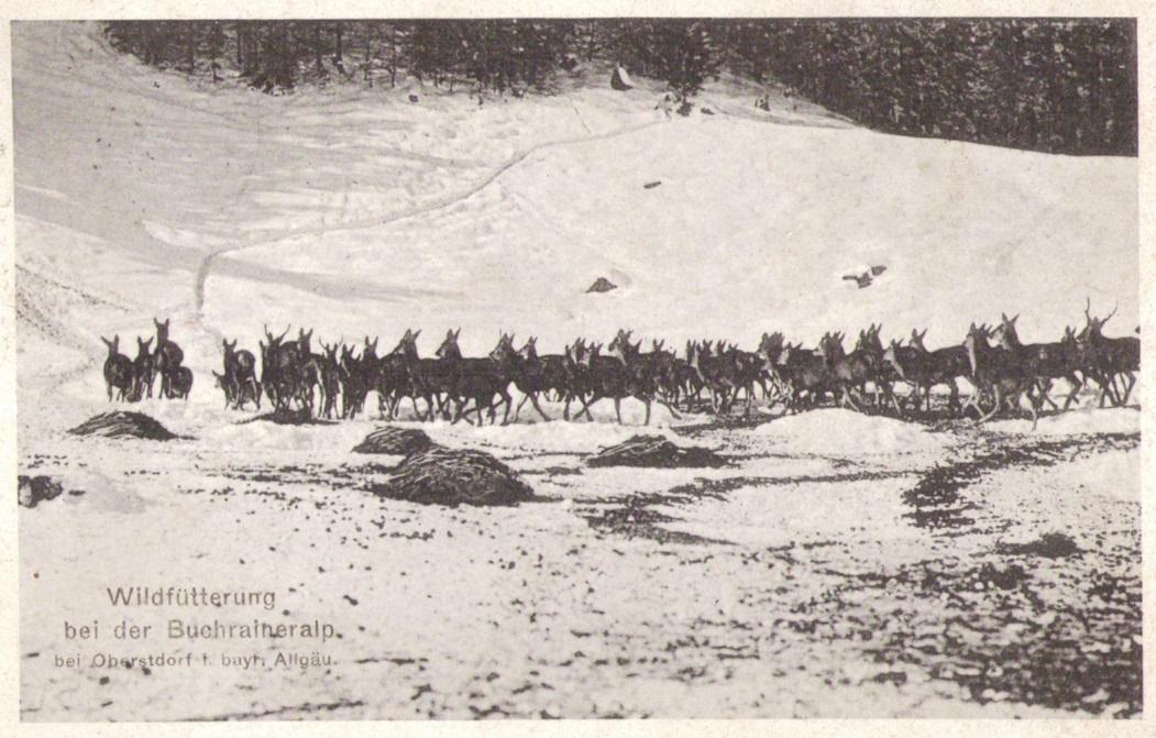 1098_Wildfuetterung 1918p.jpg