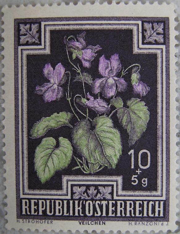 1948_01 Veilchenp.jpg
