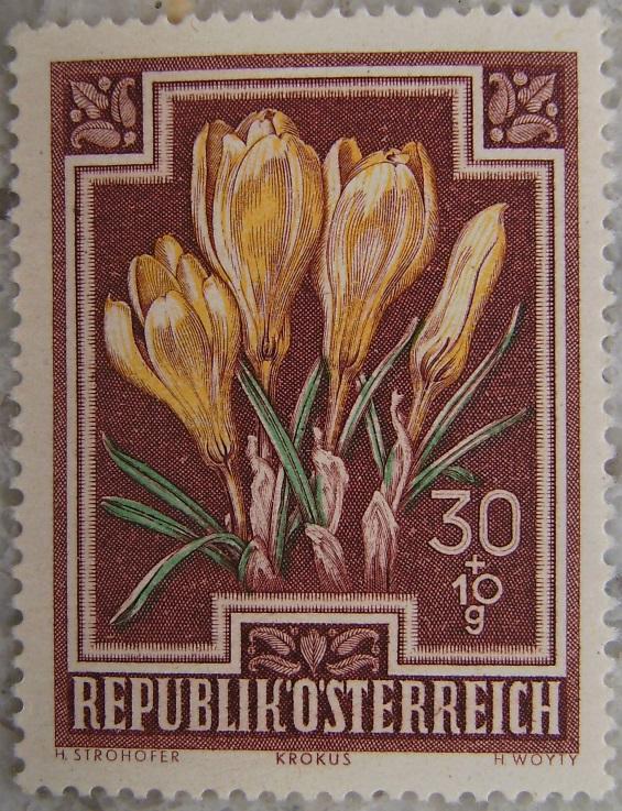 1948_03 Krokusp.jpg