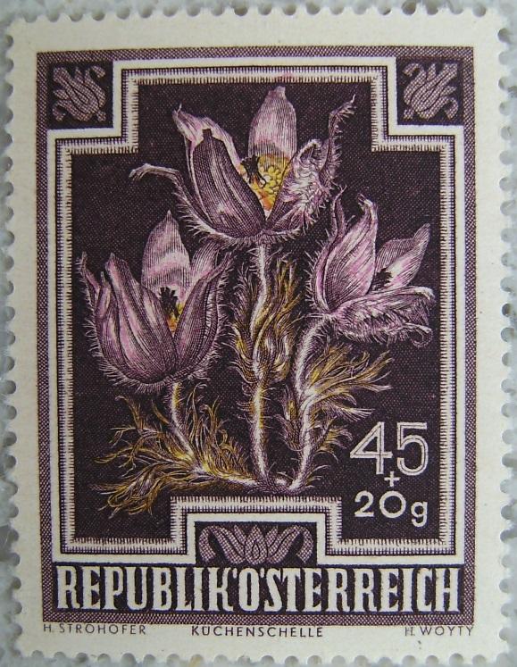 1948_05 Kuechenschellep.jpg