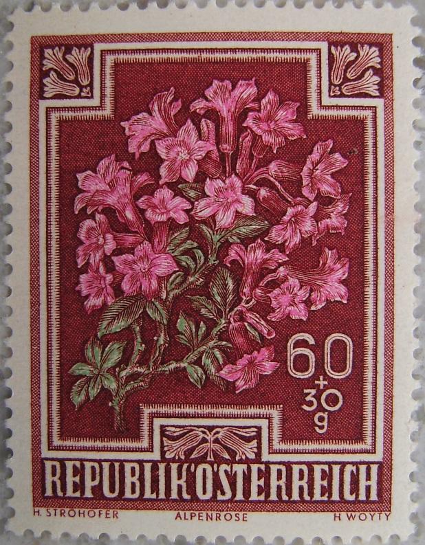 1948_06 Alpenrosep.jpg