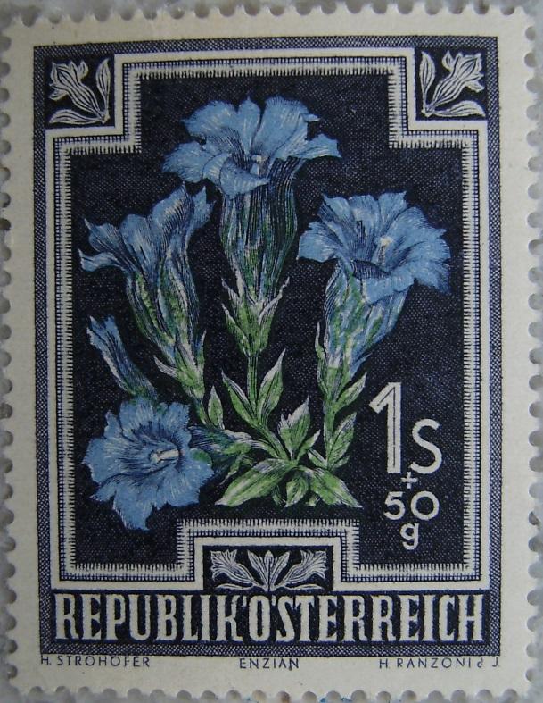 1948_09 Enzianp.jpg