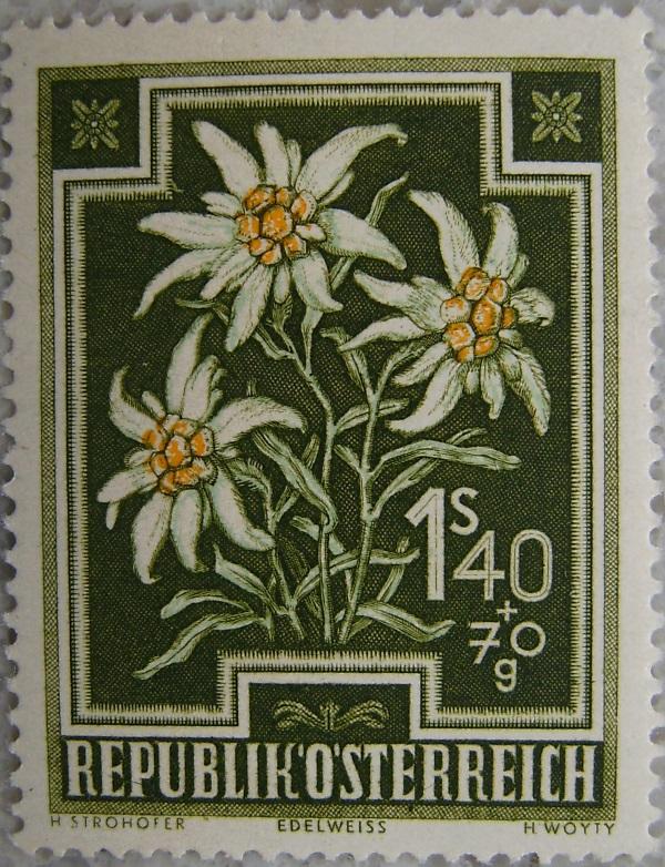 1948_10 Edelweissp.jpg