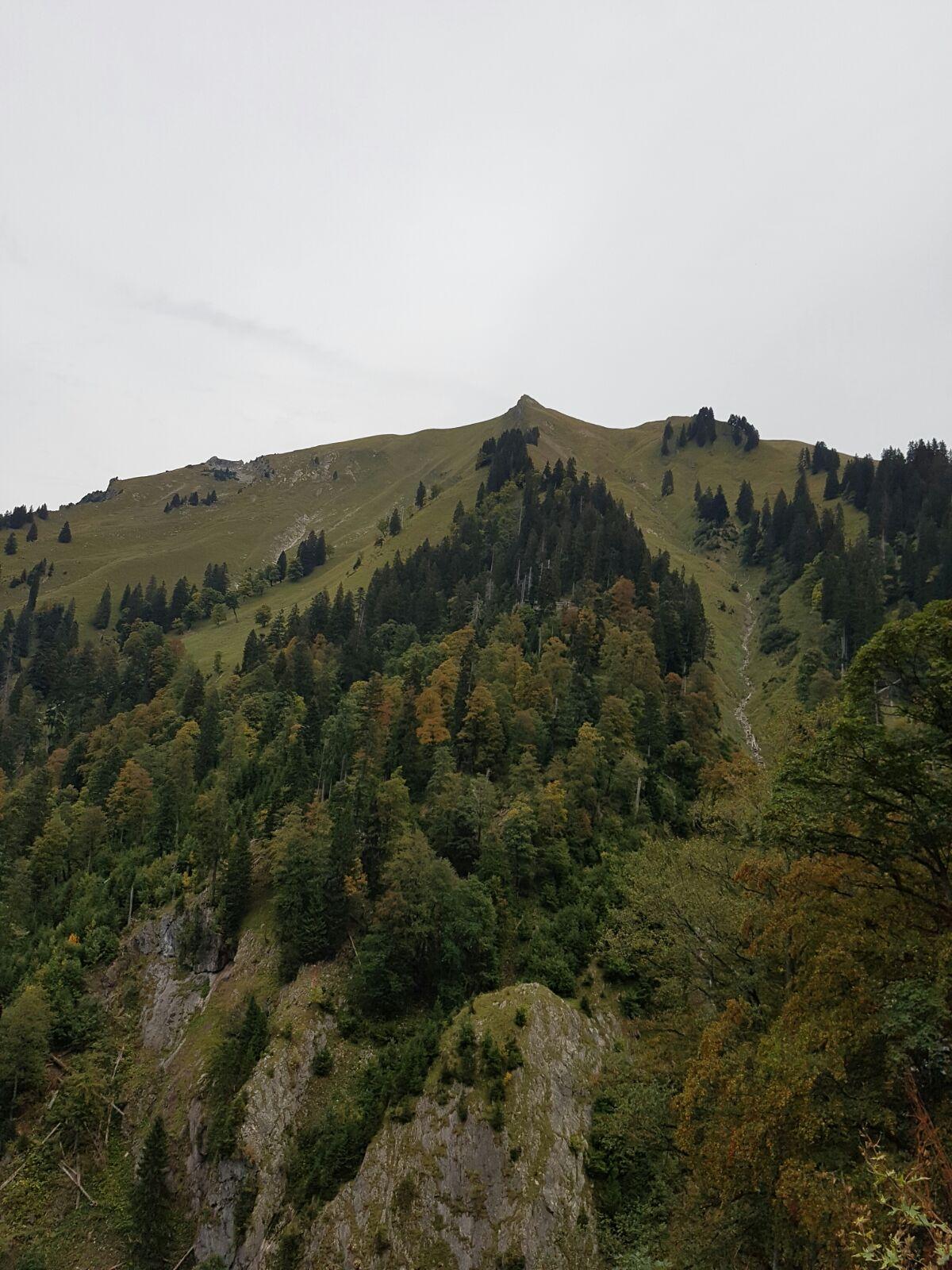 Abstieg vom Älpelekopf ins Erzbachtal.jpg